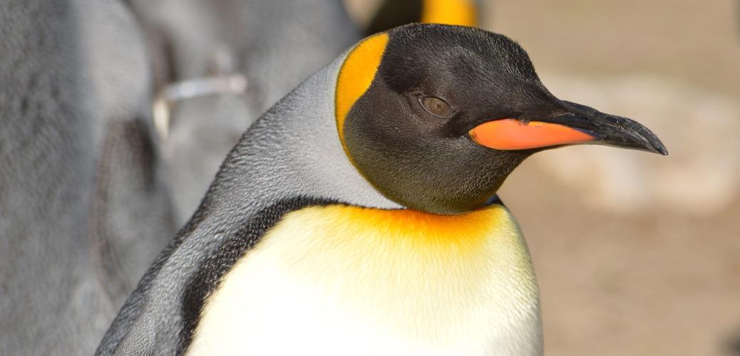 Perché usare Linux e non Windows
